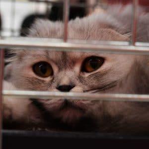 katze pflegekatze tierheim pflegestelle