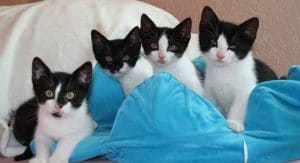 pflegestelle tierheim katze kitten katzenbabys tierschutz