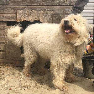 Hussein, der Boss im Tierheim in Rumänien