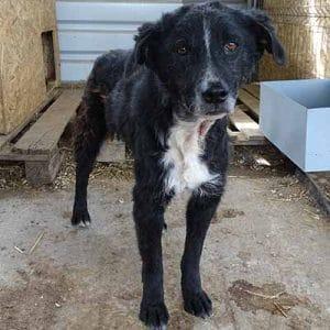 tierschutz in rumänien tierheim hunde adoptieren spenden