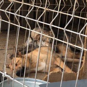 woran erkenne ich einen seriösen tierschutzverein mrsverde hunde shelter rumänien tierschutz