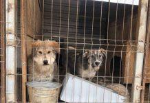 woran erkenne ich einen seriösen tierschutzverein mrsverde hunde tierheim rumänien