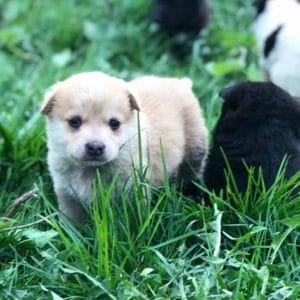 woran erkenne ich einen seriösen tierschutzverein mrsverde welpen tierheim rumänien