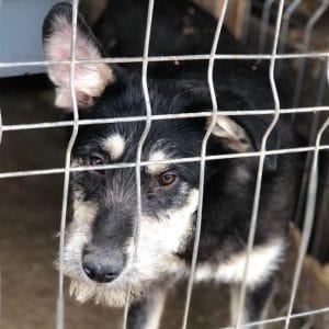 Straßenhund im Urlaub mit nach Hause Tierschutz im Urlaub