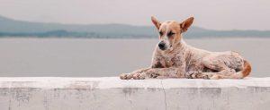 Tierschutz im Urlaub Hund gefunden