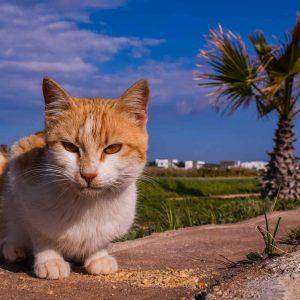 Tierschutz im Urlaub Tier gefunden Tierschutzverein
