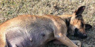 hunderettung auf kuba tierschutz
