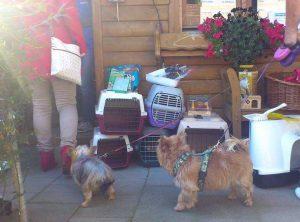 shoppen im tierheim tierzubehör für hunde