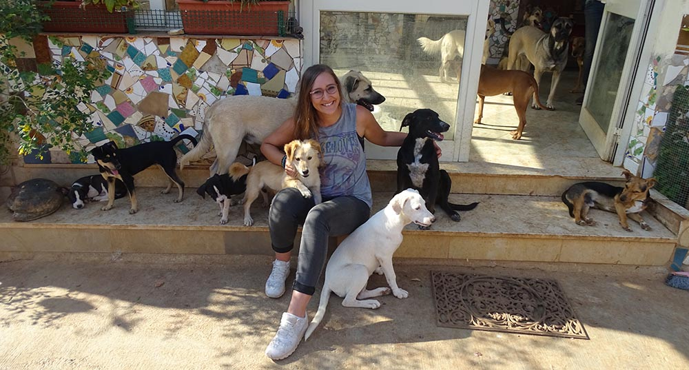ehrenamtliche arbeit tierschutz hunde sizilien hundehilfe italien