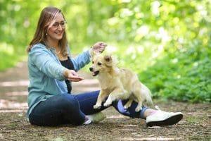 MrsVerde Lilly Hund Gelenke Sport Sprung