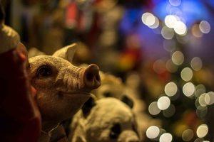 vegan weihnachten wintermarkt veganer vegetarisch