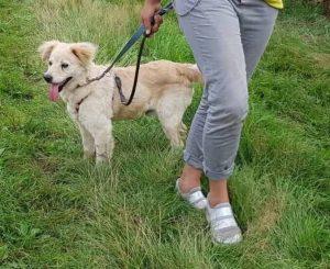 Herbert Tötungsstation gerettet Hund Tierschutz