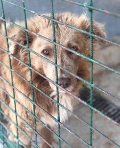 Hund in Tötungsstation Tierschutzverein