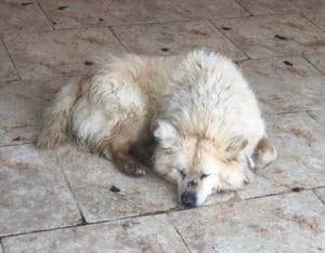 Max in Tötungsstation Rumänien MrsVerde Blog