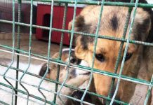 Tötungsstation Hund Welpen Rumänien