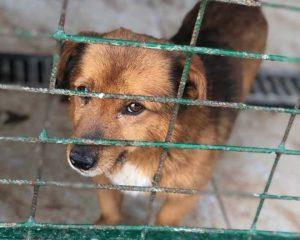 Tötungsstation Hund soll getötet werden