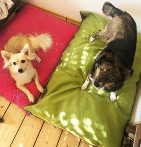 buddy büggel hundekissen nachhaltiges zubehör hund