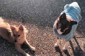 lills store hundebademantel nachhaltiges hundezubehör