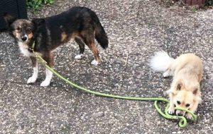 ropes upcylced nachhaltige leine halsband hund