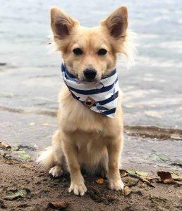 Geschenk Weihnachten Hundefreunde Halstuch Hunde Ella und Fritz Weihnachtsgeschenk für Tierfreunde