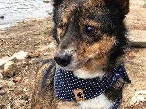 Hundehalstuch Weihnachtsgeschenk für Hunde Hundebesitzer Ella und Fritz