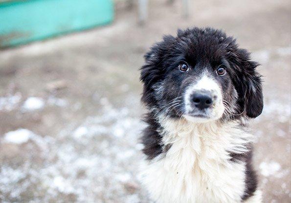 Hund Spenden-Marathon für Tiere