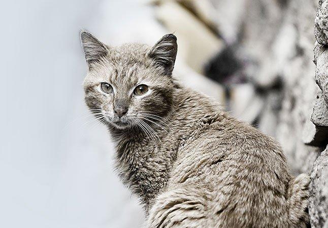 Katze Spenden-Marathon für Tiere