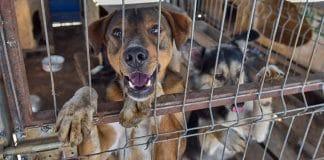 Hunderettung Europa Tierschutz Hund