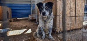 Hunderettung Europa Tierschutzverein