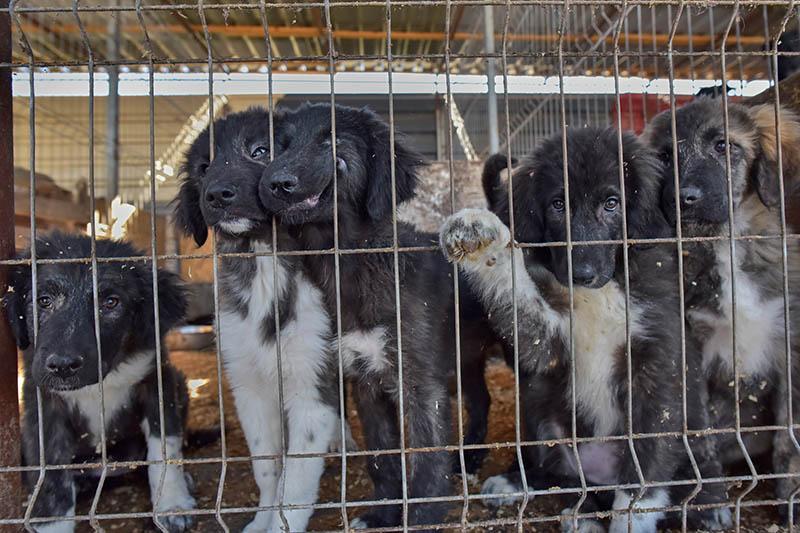 Hunderettung Europa Verein gründen Tierschutz Rumänien