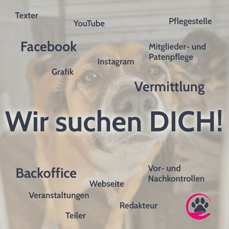 Stellenanzeigen alle Hunderettung Europa Tierschutz ehrenamt