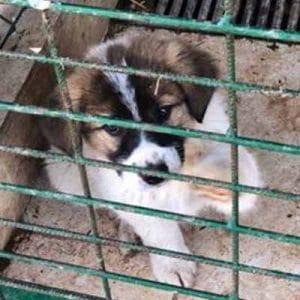 Tierschutz in Rumänien seriöses Tierheim