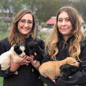 svenja mrsverde und carina im tierheim in rumänien tierschutz fellnasen nothilfe welpen hunde