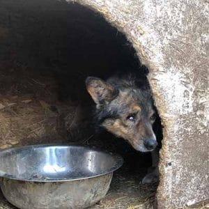 tierheim in rumänien ängstlicher hund aus rumänien