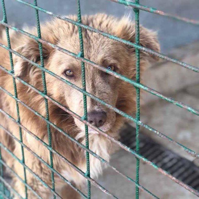 warum ein tier aus dem tierheim geld kostet hund gitter