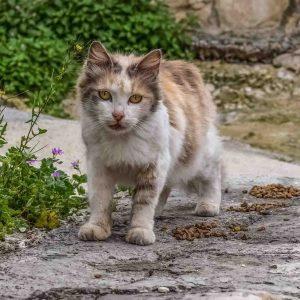 Straßenkatze gefunden im Urlaub Bulgairen Türkei Dom Rep Tierschutz im Urlaub