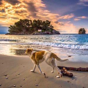 Tierschutz im Urlaub Hund am Strand