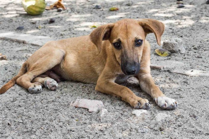 Tierschutz im Urlaub Straßenhund helfen
