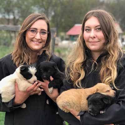 svenja mrsverde und carina im tierheim in rumänien tierschutz welpen hunde ehrenamtlich