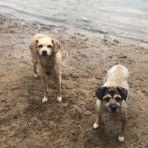 sara und sally wasser hundeblogger