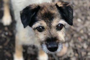 tierschutz blog petlfuencer mrs verde hundeblog