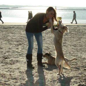 wenn der hund ein kind beißt hundeblog erfahrungen
