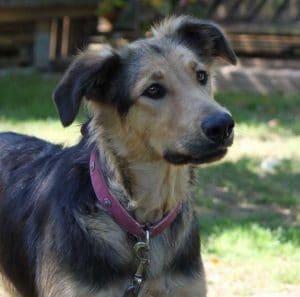 Hund gerettet aus Rumänien Tierheim Tierschutz Milou