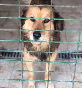 Hunde Tierschutz Tötung Tötungsstation Rumänien