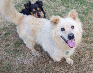 Max Tötungsstation Hund retten Tierschutz seriös