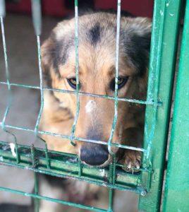 Rumänien Hundetötung Tötung Hunde retten Milou
