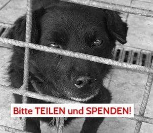 Tötungsstation Patenschaft Rumänien Spenden Blog