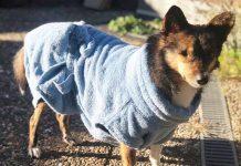 lills store nachhaltiger onlineshop für hunde nachhaltiges zubehör