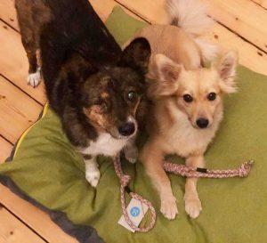 treusinn hundespielzeug fair nachhaltig