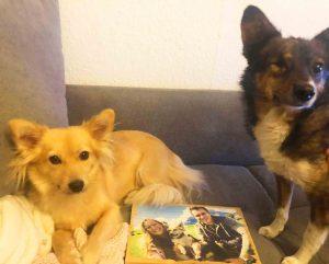 Lumberprint Weihnachtsgeschenke für Veganer und Tierfreunde Empfehlung Blog MrsVerde